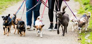 Dog Walking: Different Options for Exercising Your Dog